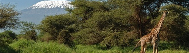Safari Tanzanie Amboseli