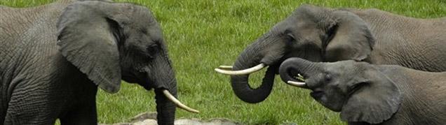 Safari Tanzanie Mont Kenya