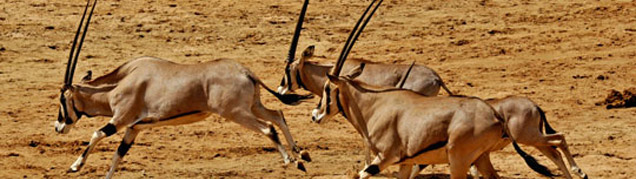 Safari Tanzanie Samburu